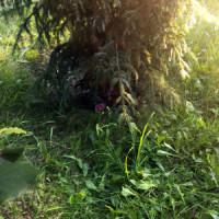 Poklad pod stromkem