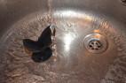 Anální kolík Gaper – ve vodě
